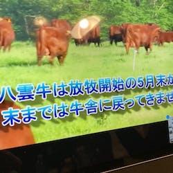日本草地畜産種子協会 さんの 北海道八雲町の大草原でのびのび育った、北里八雲牛を牛カツで味わおう。<2/19(金)締切>